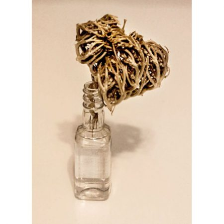 Rose of Jericho in water
