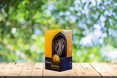 Small Package Rose of Jericho